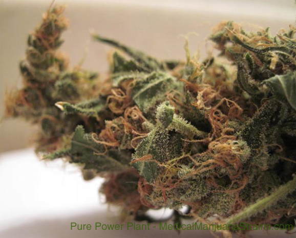 Pure Power Plant Cannabis Medical Marijuana