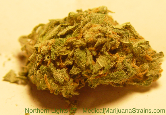 northern lights #7