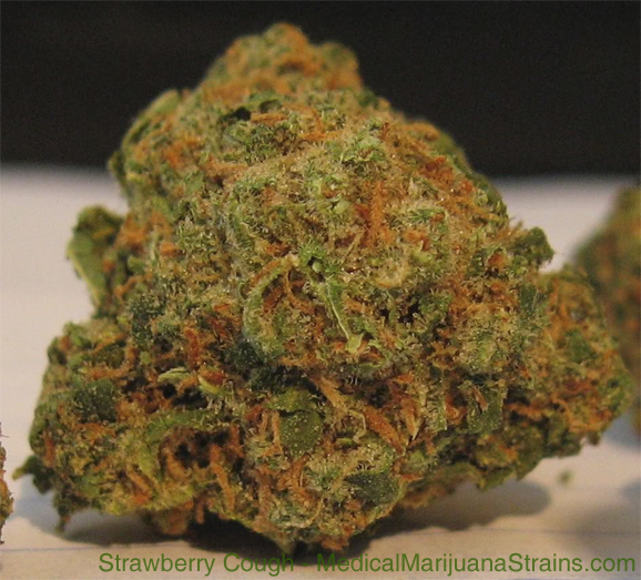 strawberry cough medical marijuana