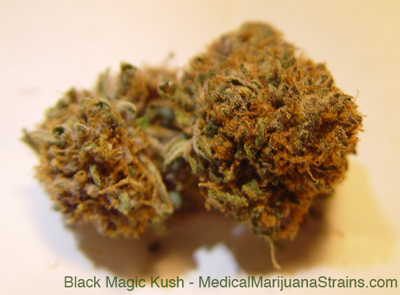 Black Magic Kush