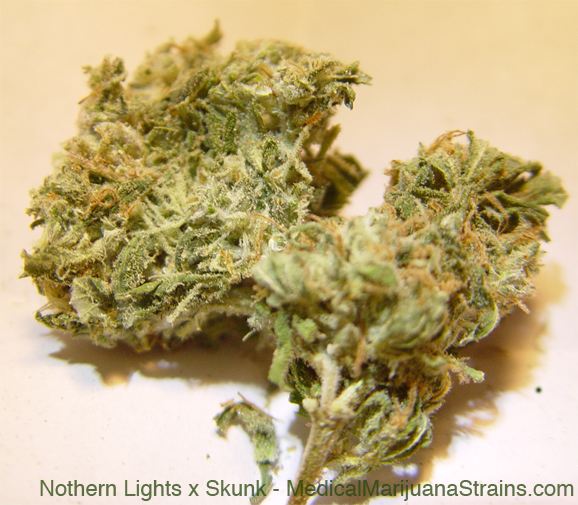 Nothern Lights x Skunk