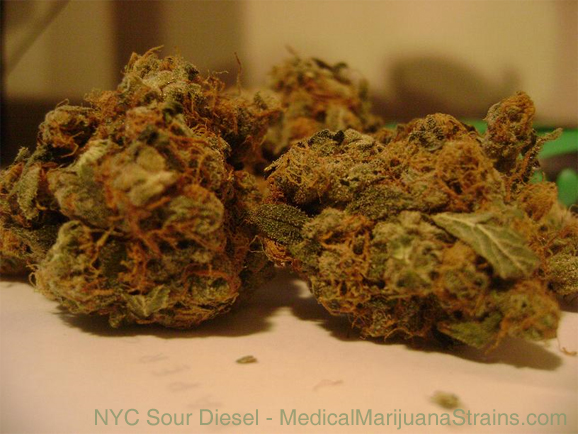 nyc sour diesel