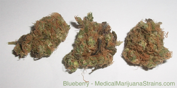 blueberry