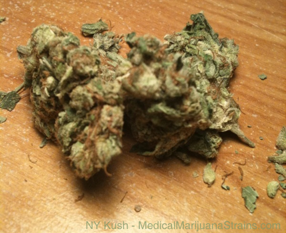 New York Kush