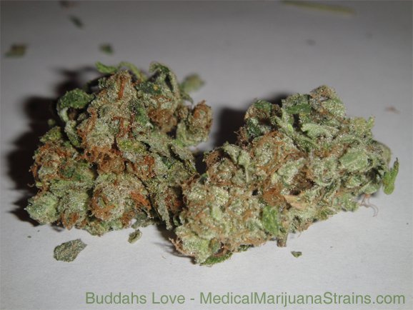 buddahs love medical marijuana