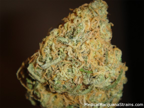 snowcap medical marijuana