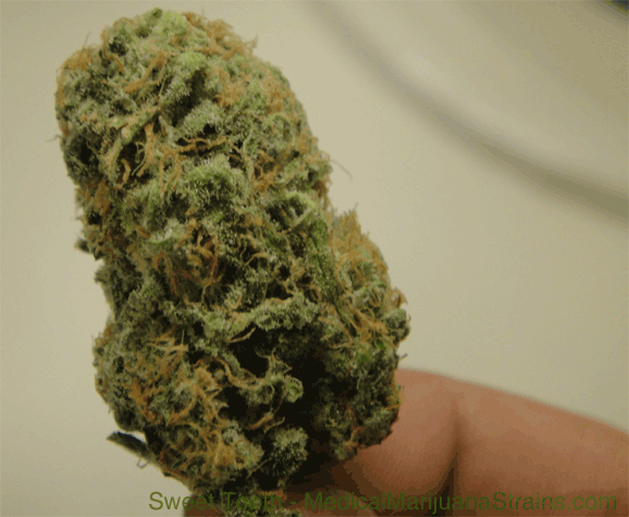 sweet tooth medical marijuana