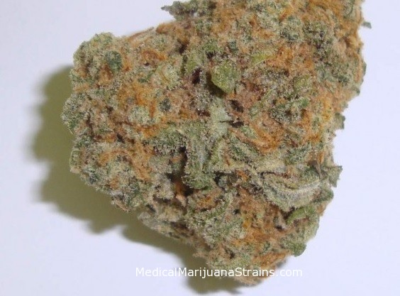 Green Crack Marijuana