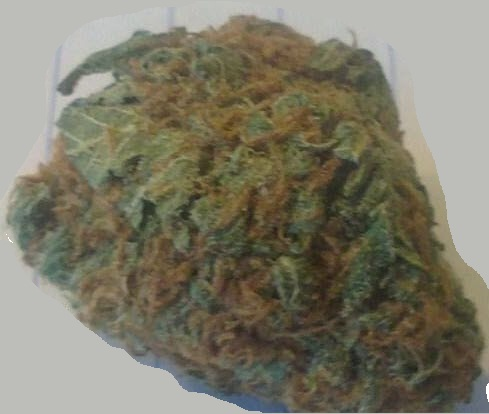LEARN WHICH STRAIN OF MARIJUANA TREATS WHICH MEDICAL CONDITION HERE Critical-Mass-Cannabis-Strain