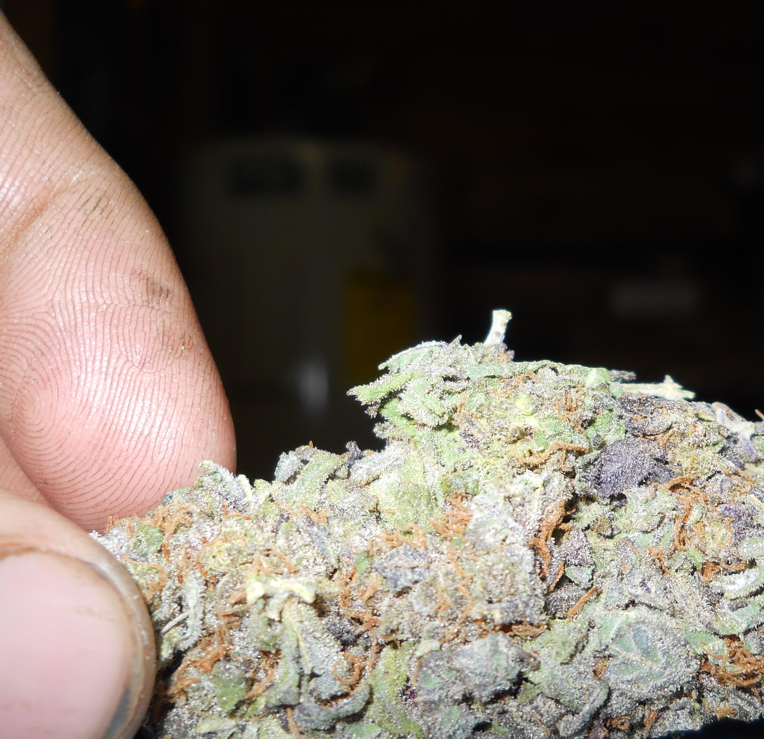 yellow-weed-strains