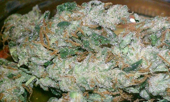 Strawberry Diesel Kush