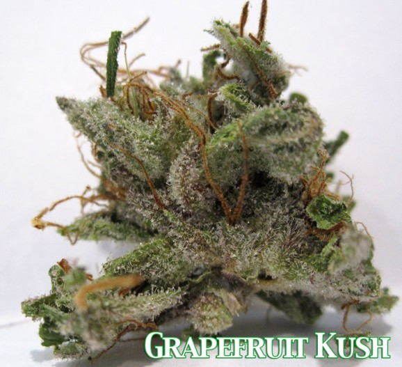Grapefruit Kush Marijuana