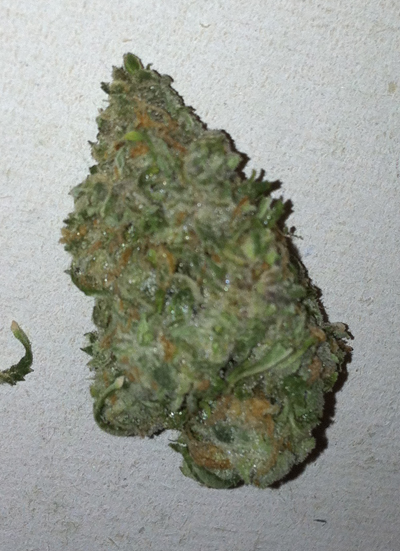 Blue Haze Marijuana