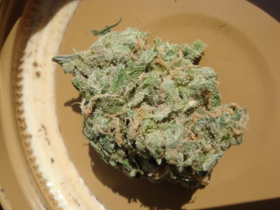 Blue Dream Marijuana