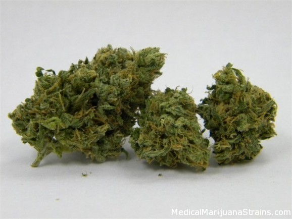 caterpillar shoes durban poison marijuana pics and strains