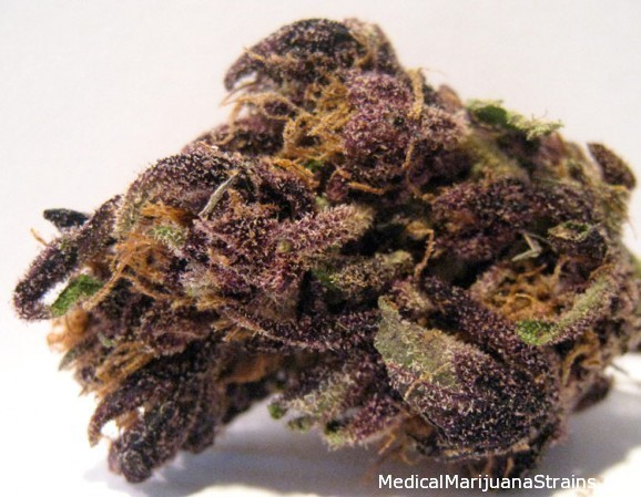 Purple Monkey Balls