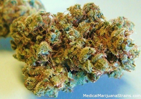 Dutch Treat